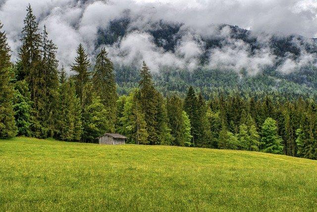 Spacer po lesie - jak wpływa na zdrowie?